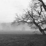 Day Break at Waverley Abbey, Farnham, Surrey.